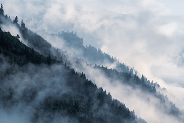 Obraz Forested mountain slope in low lying valley fog with silhouettes of evergreen conifers shrouded in mist.