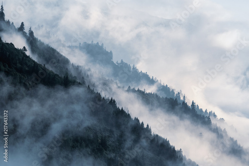 Fototapeta Forested mountain slope in low lying valley fog with silhouettes of evergreen conifers shrouded in mist. obraz