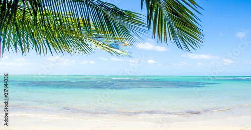 Foto op Plexiglas Caraïben Ferien, Tourismus, Sommer, Sonne, Strand, Auszeit, Meer, Glück, Entspannung, Meditation, Palmen, Mangroven: Traumurlaub an einem einsamen, karibischen Strand :)