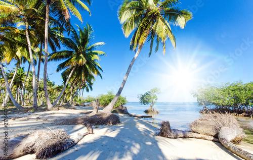 Deurstickers Centraal-Amerika Landen Ferien, Tourismus, Sommer, Sonne, Strand, Auszeit, Meer, Glück, Entspannung, Meditation, Palmen, Mangroven: Traumurlaub an einem einsamen, karibischen Strand :)