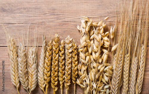 ears of wheat, rye, barley and oats