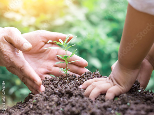 Fotografie, Obraz  Kid and mother hands planting young tree on the black soil,save world concept
