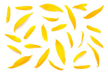 Sunflower Petals Isolated On White Background