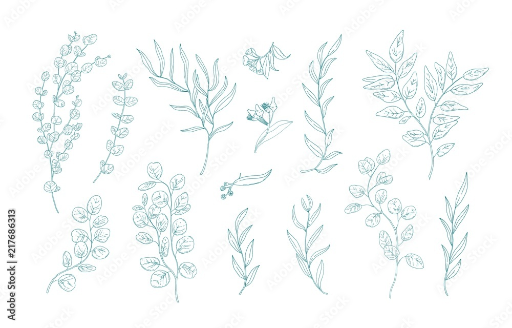 Fototapeta Collection of various eucalyptus branches with leaves hand drawn with green contour lines on white background. Bundle of botanical design elements. Monochrome realistic floral vector illustration.