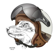 Image Portrait Fox In Motorcycle Helmet. Vector Illustration.