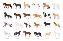 Collection Of Horses Of Variou...