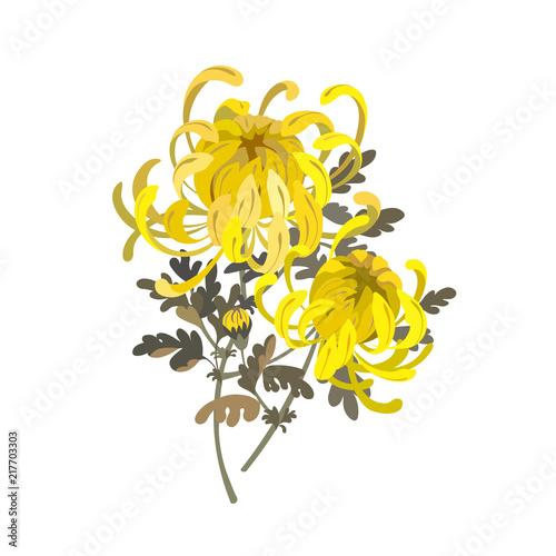 Fotografia Chrysanthemum flowers
