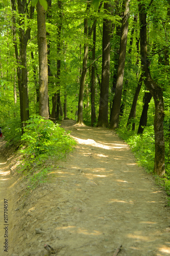 Fototapety, obrazy: An empty gravel path in a dense green forest surrounded by tall trees against the background of the sun passing through them.