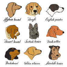 Afghan Hound, Airedale Terrier, Basset Hound, Beagle, Dachshund, English Pointer, Golden Retriever, Irish Setter, Scottish Terrier Vector Dog Breed Set. FCI Hound, Terrier, Beagle And Related Breeds.