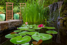 Garden Pond With Water Plants And Waterfall
