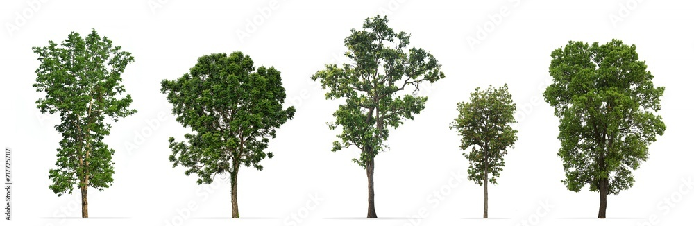 Fototapeta Collection of trees isolated on white background