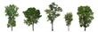 Leinwandbild Motiv Collection of trees isolated on white background