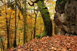 Autumn forest with leaves