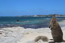 Seascape Of Rottnest Island Wi...