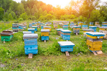 A Lot Of Colorful Hives Made O...