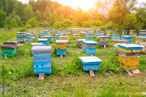 Photo A lot of colorful hives made of wood in the form of boxes on an apiary in a fiel