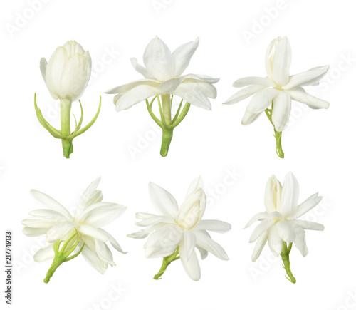 Fotografie, Obraz  White flower, Thai jasmine flower  isolated on white background.