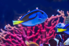 The Marine Fish Are Color Of T...