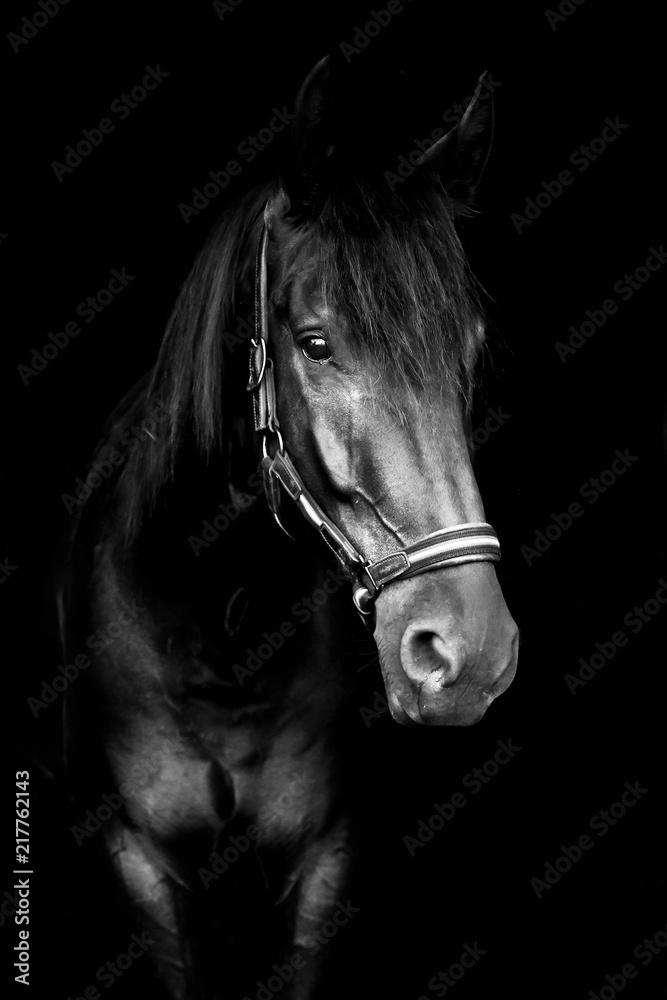 Fototapeta Black horse isolated on black