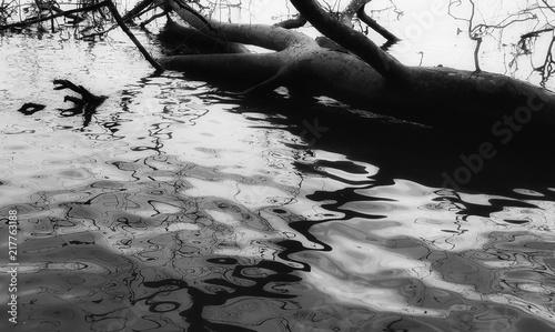 Fototapeten tree log in water reflecting rippling branches