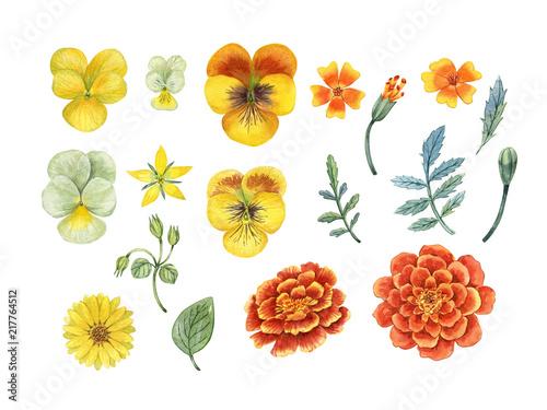 Fotomural  marigold flowers