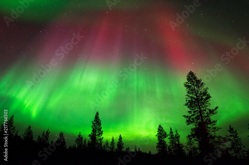 Aurora Borealis, Northern Lights, above boreal forest in Northern Finland.