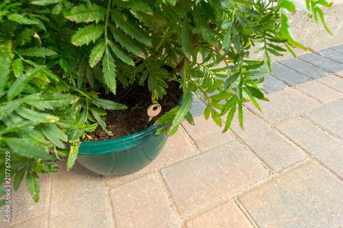 Fotografía  A door key hidden in a plant pot