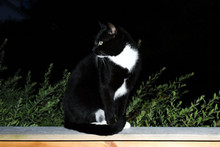 A Black Cat With White Spots Sits On An Open Summer Terrace At Night.