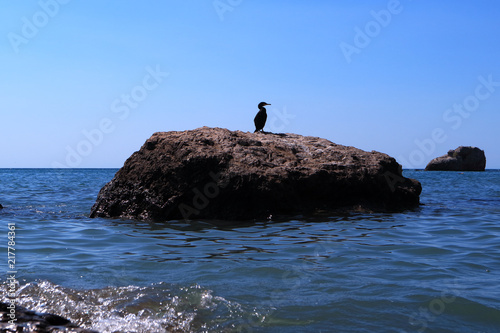 The image of a cormorant sitting on a rock. Poster