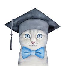Cute Little Gray Kitten With B...