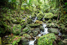 El Yunque National Forest - Pu...