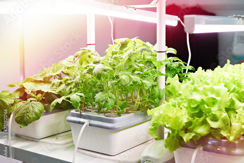 Cultivation of plants by modern methods