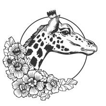 Giraffe Head Animal Engraving Vector