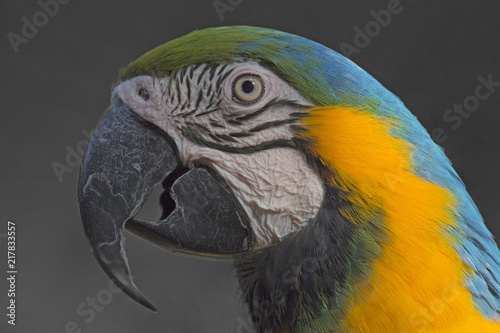 Photo Stands Parrot Close up of a beautiful colored parrot