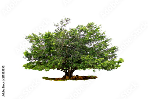 Photo Stands Bonsai Green big tree from botanical garden isolated on white background.