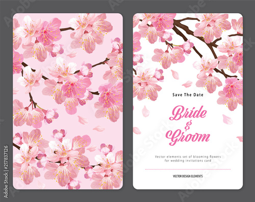 Fototapeta Sakura flowers background template