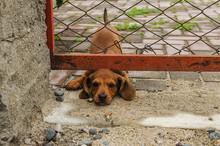 Little Dachshund Puppy Stuck H...