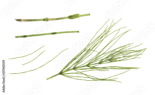 Horsetail (Equisetum arvense), fern, isolated on white background, top view