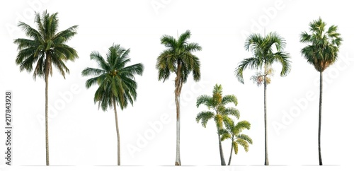 Collection of Palm trees isolated on white background