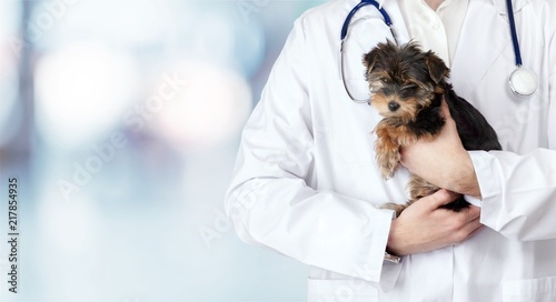 plakat Small cute dog examined at the veterinary doctor, close-up