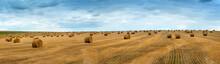 Big Landscape Of Hay Bales On ...