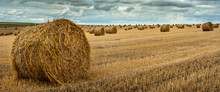 View Of Hay Bales On The Field After Harvest