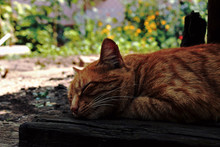 A Picture Of A Beautiful Moment Is The Dream Of A Cat When He Dreams Of Fish
