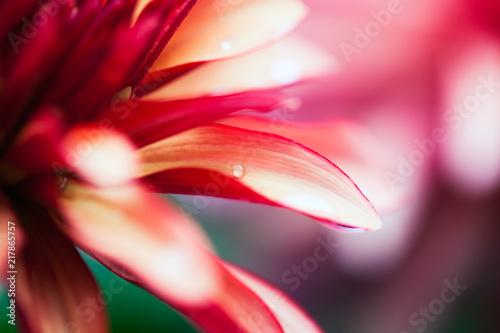 Poster Macro photographie Pink Flower Macro