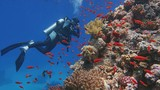 Man scuba diver admiring beautiful colorful coral reef