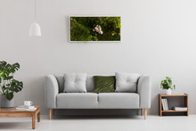 Grey Sofa With Pillow In Real Photo Of Bright Sitting Room Interior With Books On Wooden Shelf, Coffee Cup On Table And Garden In Frame Hanging On The Wall
