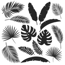Silhouettes Tropical Leaves