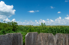 The Cornfield Beyond The Fence