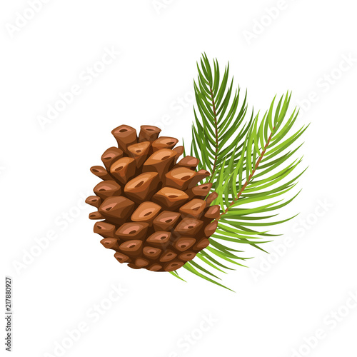 Obraz pine branch with cone - fototapety do salonu