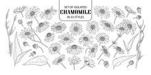 Set Of Isolated Chamomile In 33 Styles.